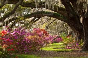 nature garden photos