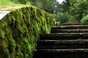 nature moss wallpaper