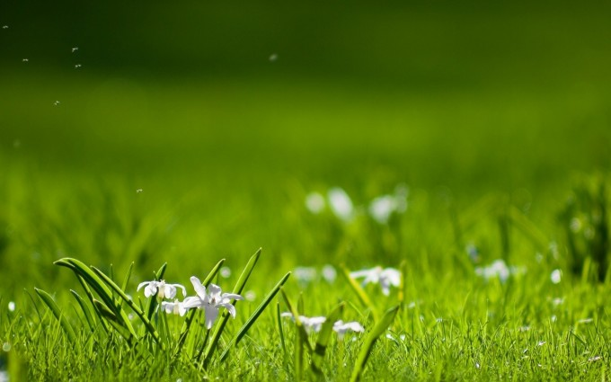 nature pictures grass magnificent