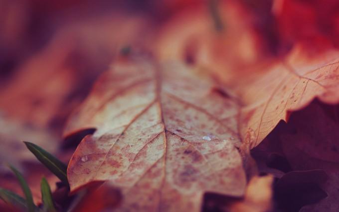 nature up close backgrounds