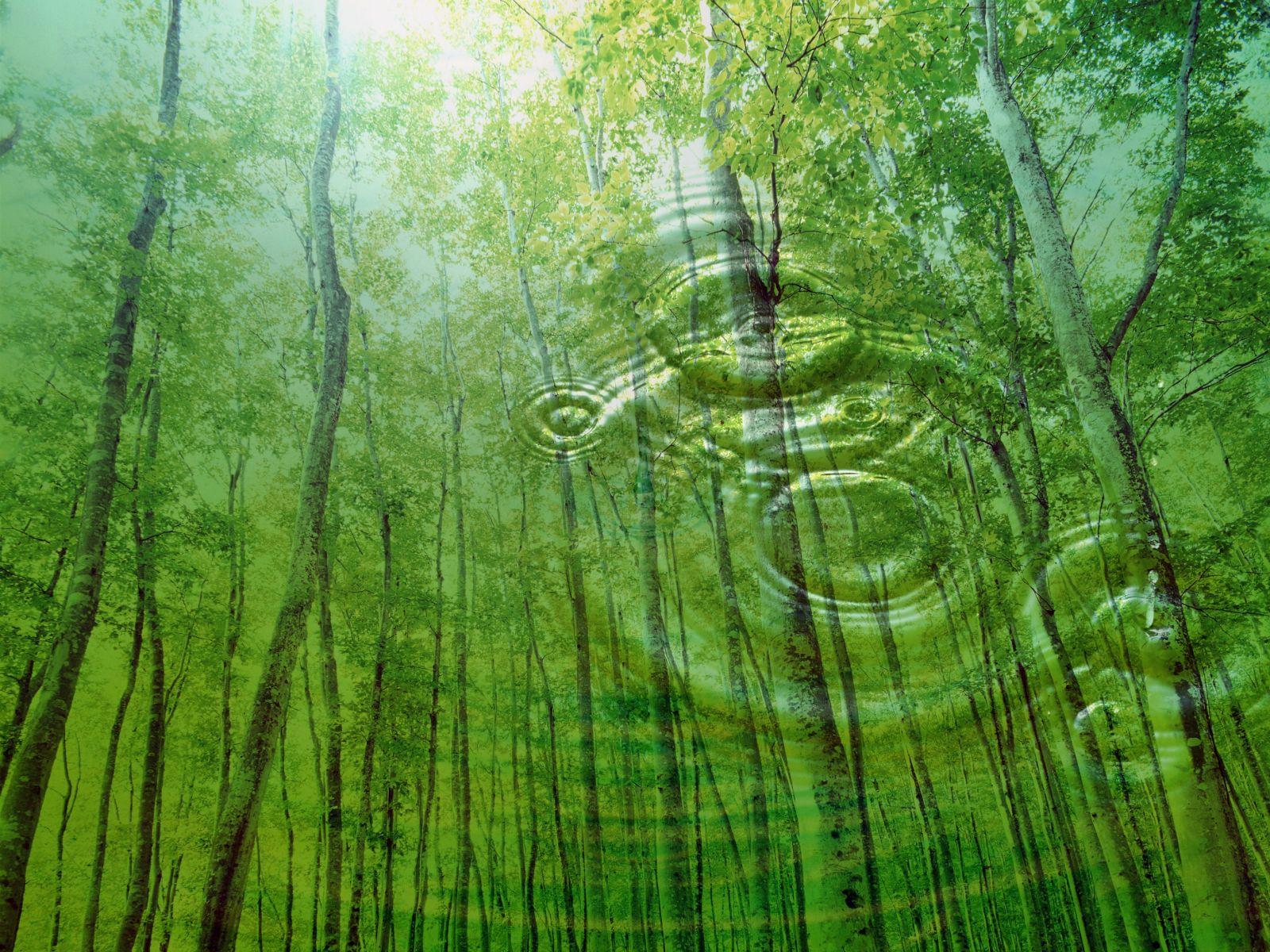 nature wallpaper A33