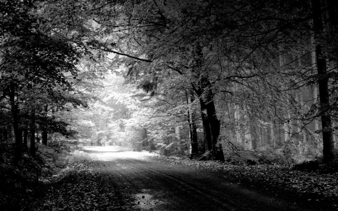 night forest wallpaper black