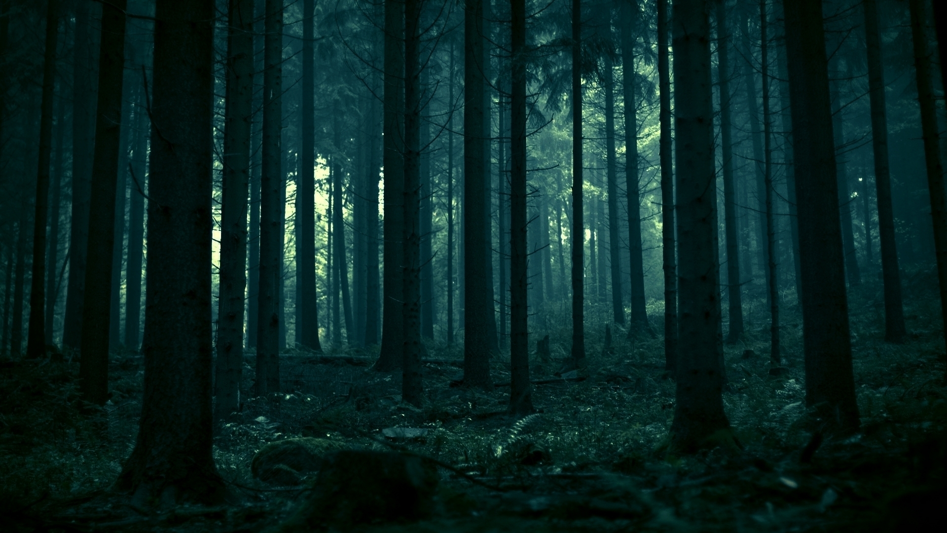 night forest wallpaper cool