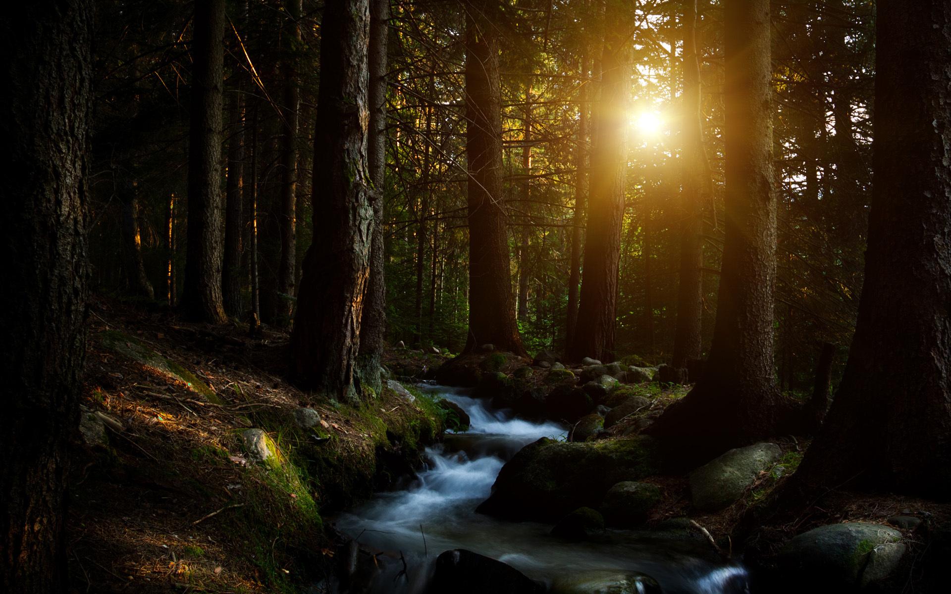 night forest wallpaper sunset