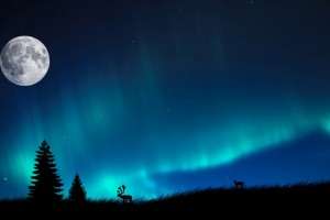 northern light A1