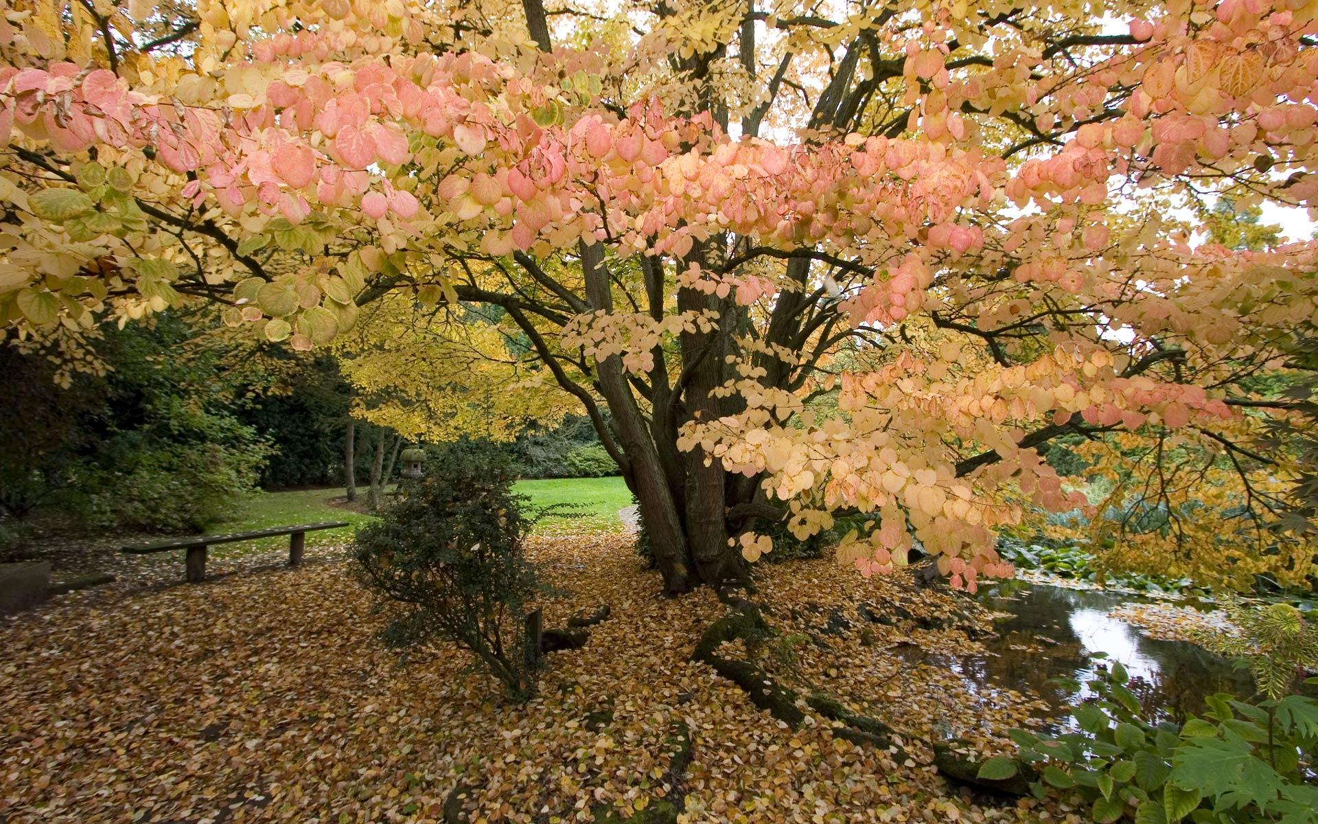 oak tree wallpaper autumn