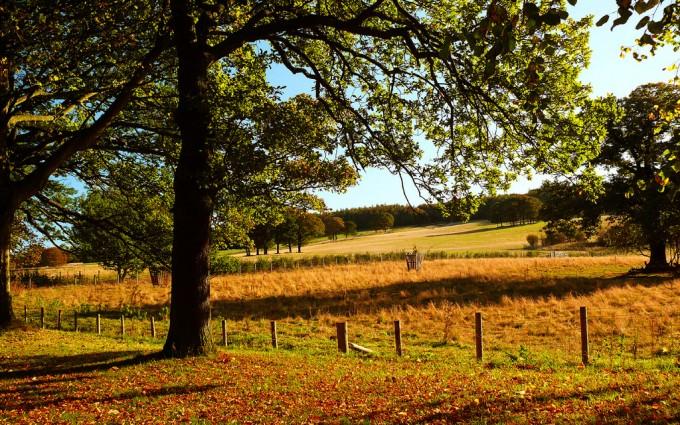 oak tree wallpaper background
