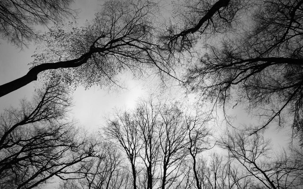oak tree wallpaper dark