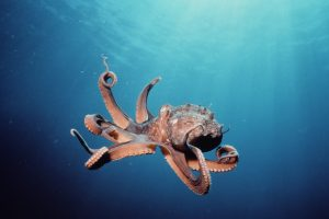 octopus wallpapers hd