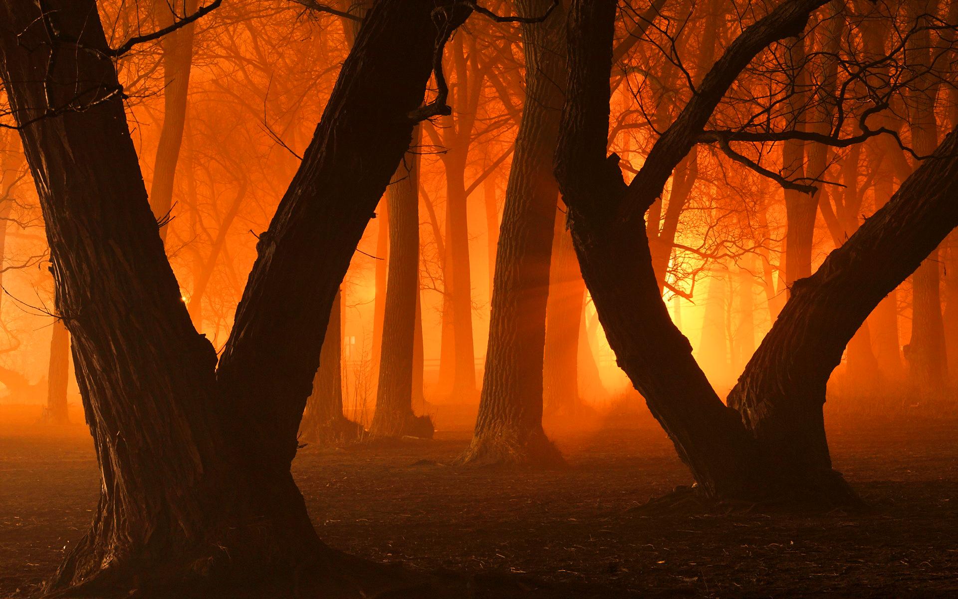 orange forest wallpaper