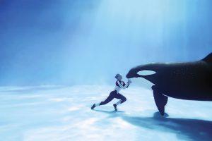 orca beautiful wallpaper