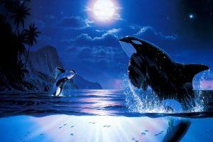 orca hd