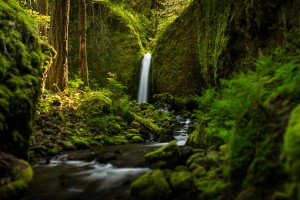 oregon wallpaper forest nature