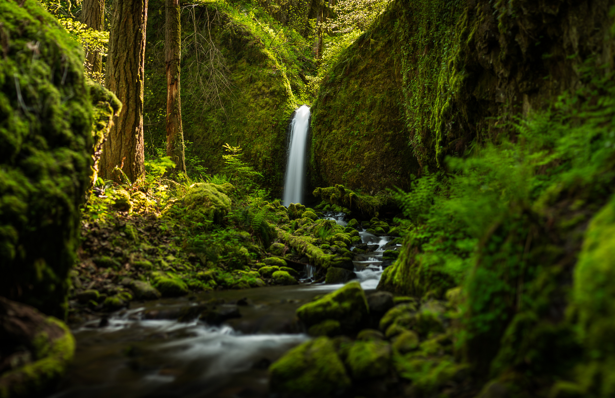 oregon wallpaper forest nature aa