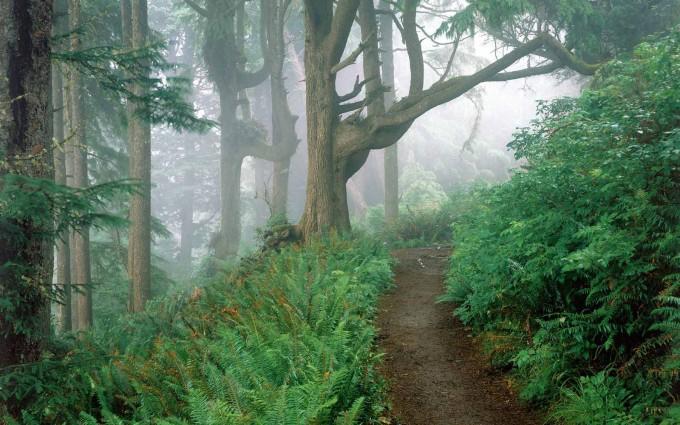 oregon wallpaper jungle path