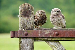 owl A4