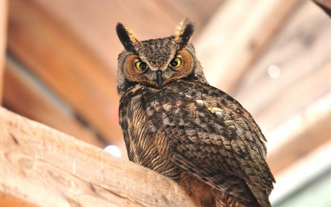 owl A7