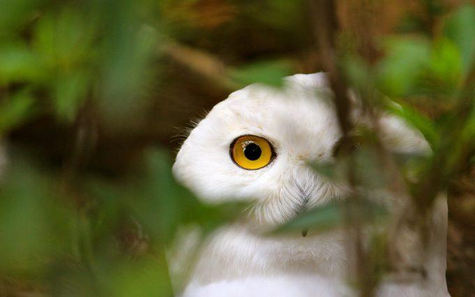 owl A9