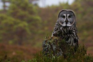 owl art wallpaper