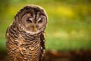 owl backgrounds 1080p