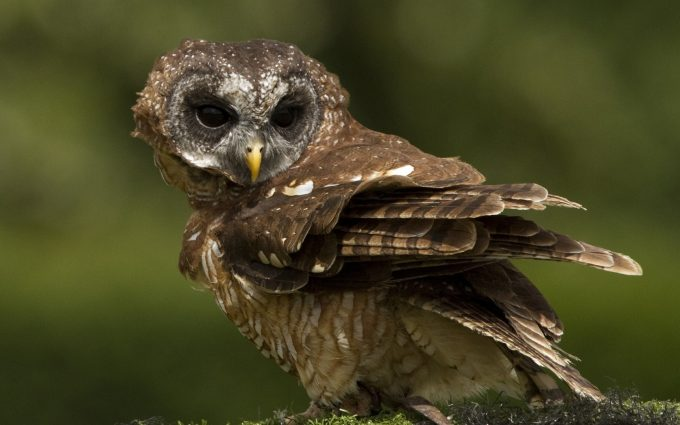 owl beautiful