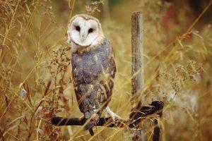 owl desktop