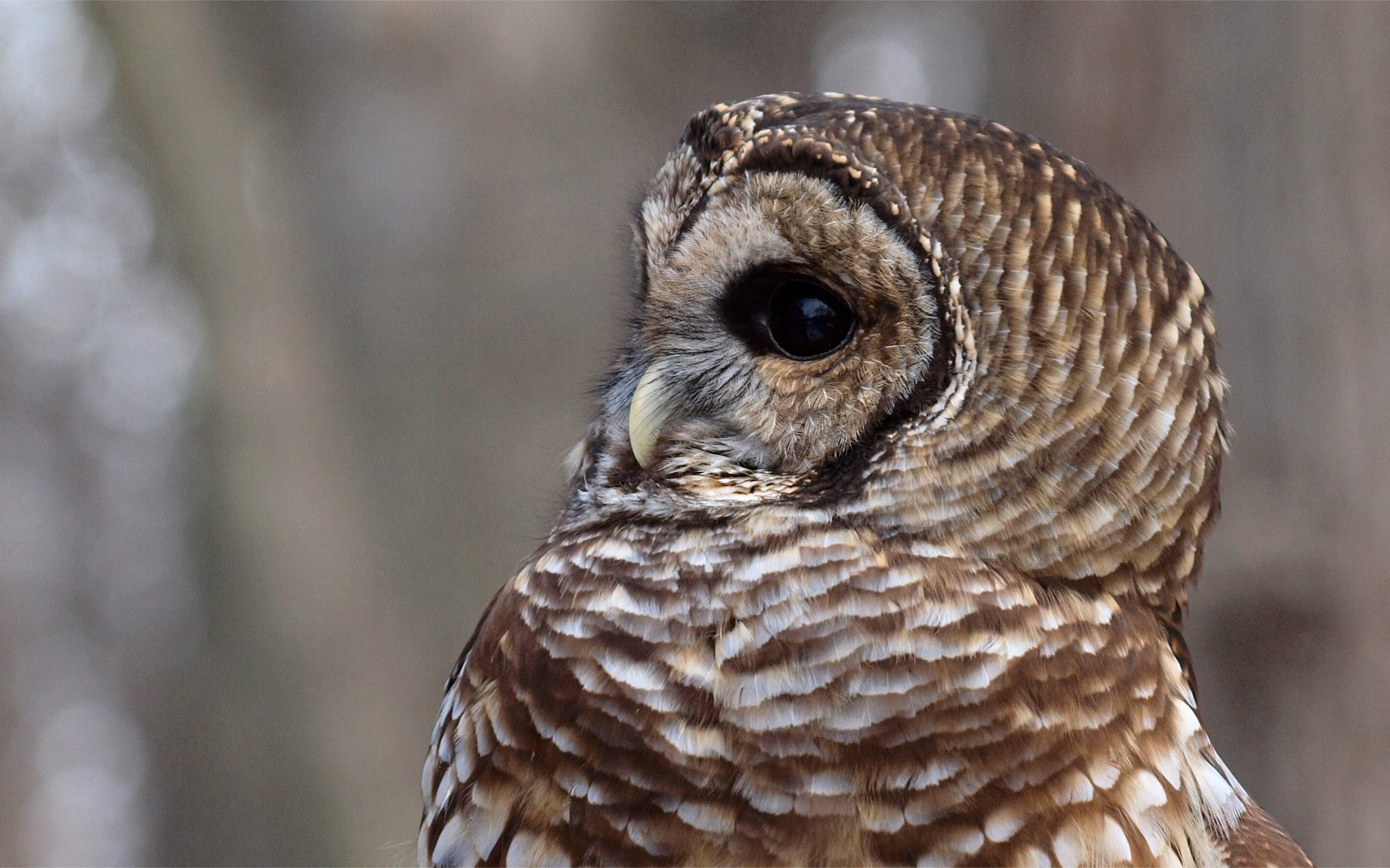 owl hd A1