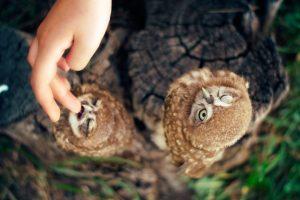 owl hd A10