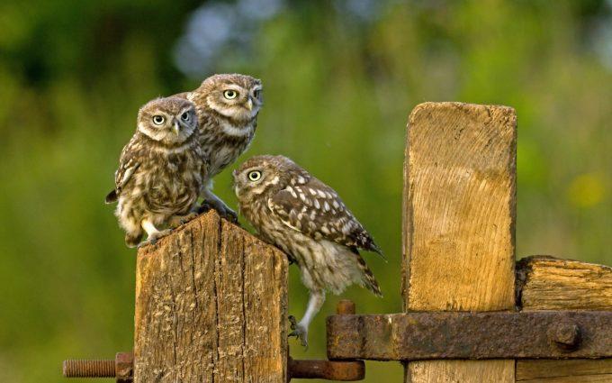 owl hd A4