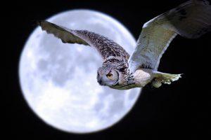owl hd A5