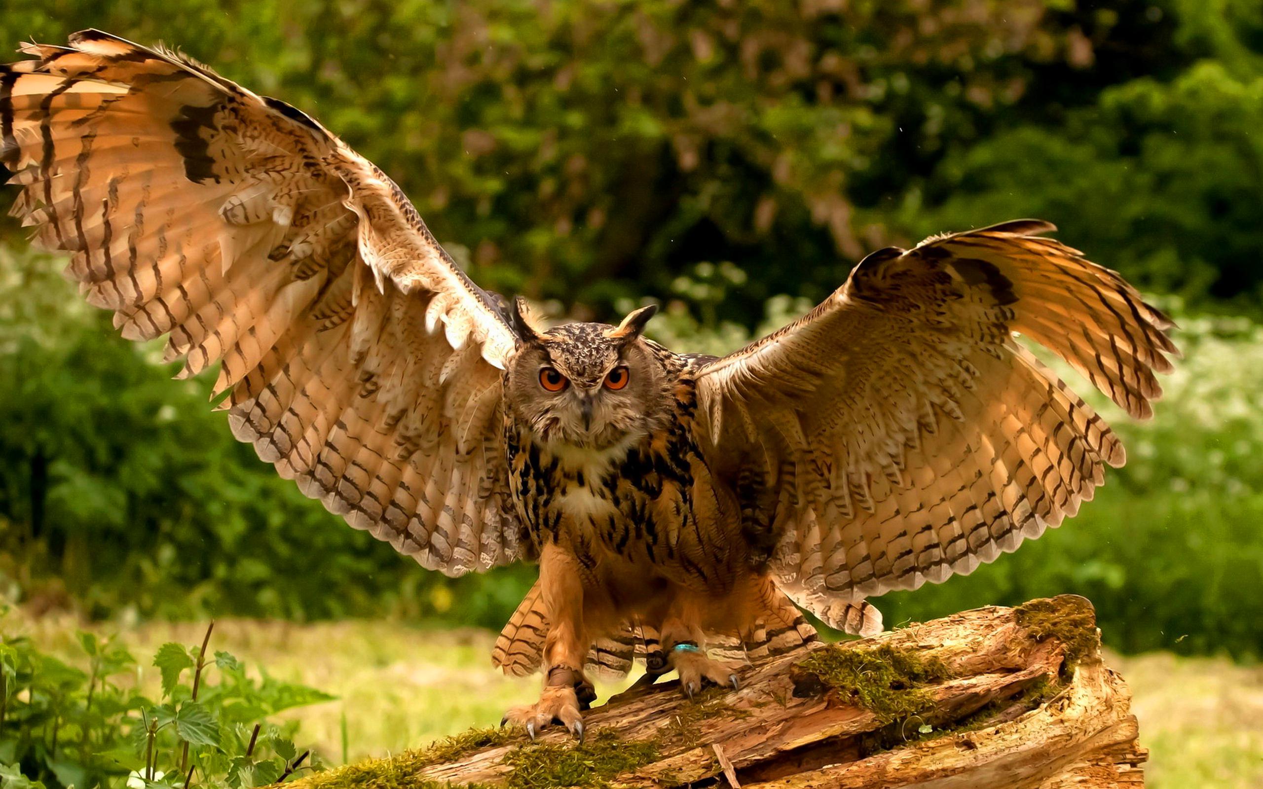 owl hd A6