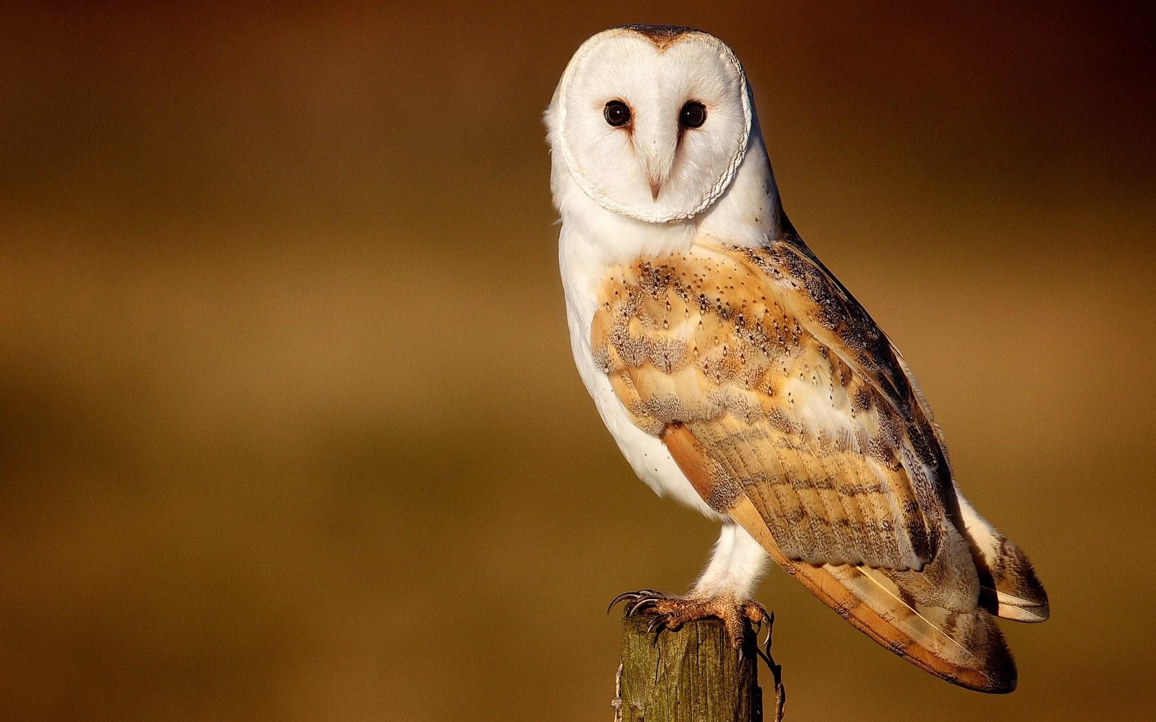 owl hd A8