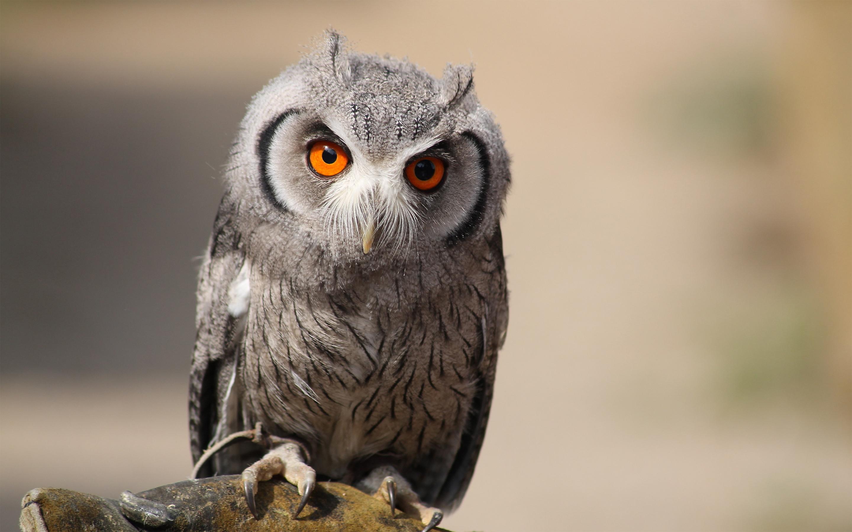 owl hd A9