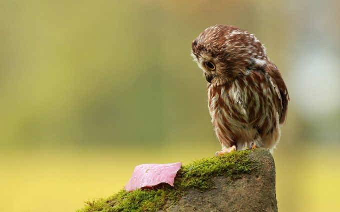 owl hd images