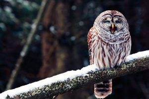 owl nature photo