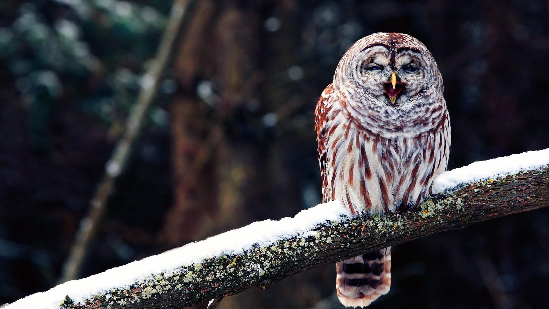 owl nature photo