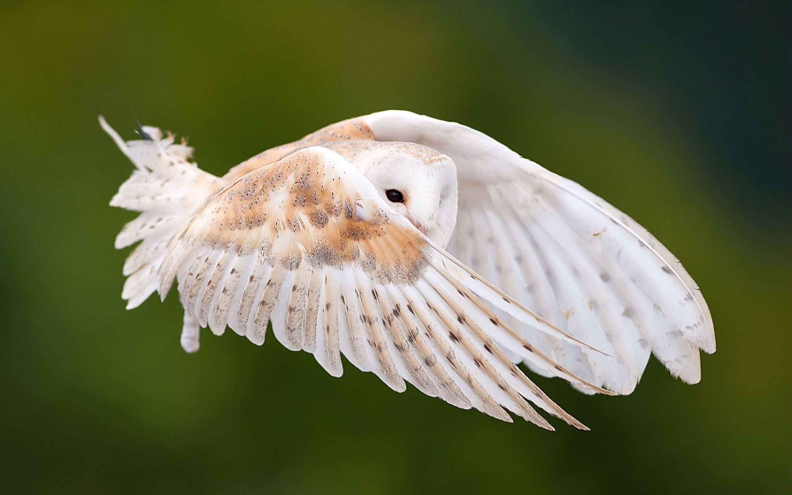 owl pattern wallpaper