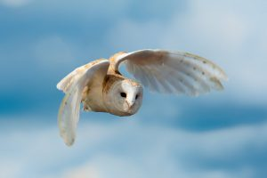 owl picture