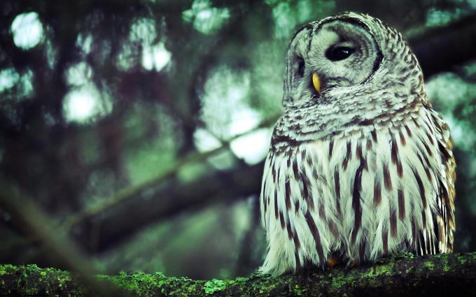 owl pictures hd