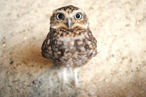 owl screensaver