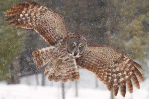 owl wallpaper A5