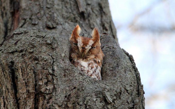 owl wallpaper A6