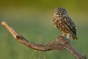 owl wallpaper border