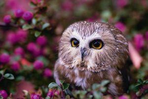 owl wallpaper images
