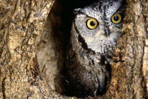 owls wallpaper hd