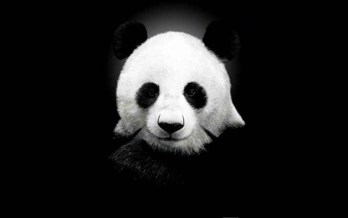 panda desktop