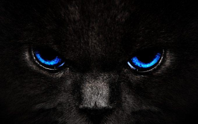 panther eyes wallpaper