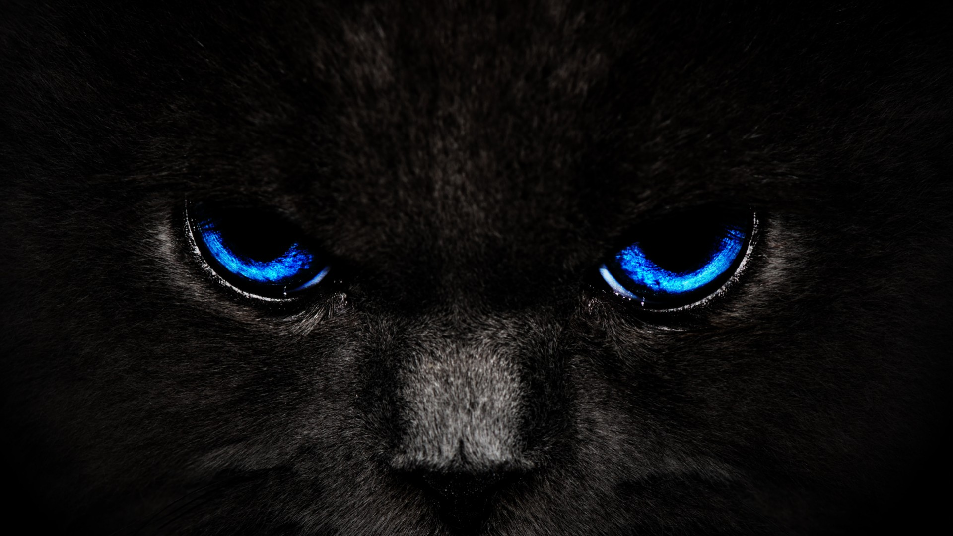 panther eyes wallpaper