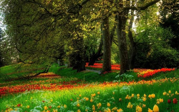 park wallpaper flowers