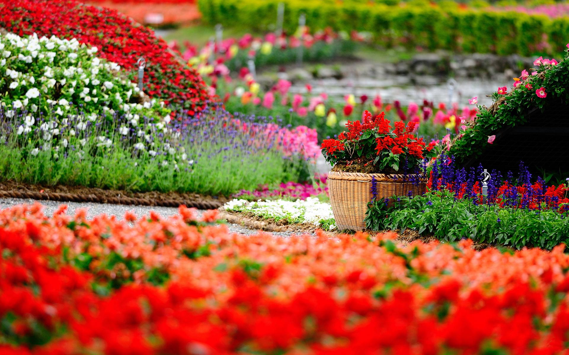 park wallpaper flowers hd